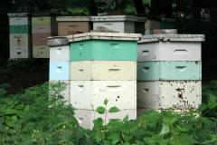 Beehives1-e1524779289832