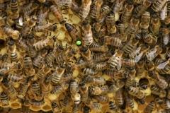 beehive-beekeeping-bees-236706-e1524777059598